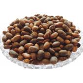 Jamalghota Beej - Jamalghota Seeds - Croton Seeds - Croton Tiglium