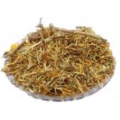 Kateri Panchang - Solanum Xanthocarpum - Bhatkatiya - Kantakari - Katehli - Katehri Panchang