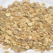 Khubbaji - Khubaji - Khoobaji - Khubbazi - Malve sylvestris - Gurchanti