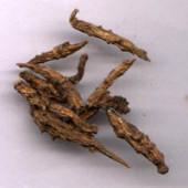 Atish Kadwi - Ativisha Bitter - Atiwisha - Ateesh - Aconitum heterophyllum