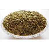 Saunf Moti - Fennel Seeds Thick - Aniseed - Foeniculum vulgare Mill