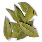 Tej Patta - Tejpatta - Bay Leaf - Cinnamomum tamala