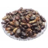Lal Arandi Beej - Red Castor Seeds - Erand Seeds - Ricinus communis