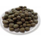 Karanjwa Beej - Kat Karanja Seeds - Sagargota – Caesalpinia Bonducella
