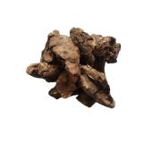 Pashan bhed (Patharchatta) Root - Pakhanved Jadd - Aquatic Rotula - Bergenia ligulata