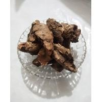 Pashanbheda (Patharchatta) - Bergenia ligulata
