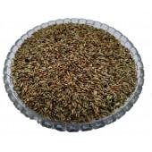 Apamarg Seeds - Uttareni Seeds - Latjira Beej - Chirchita - Latjeera - Achyranthes Aspera